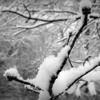 Jennifer Tatum - White Snow  artwork