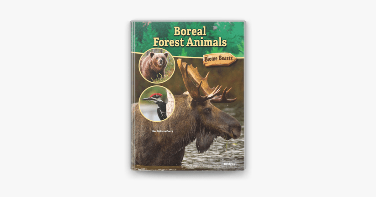 Frequently taiga mammals have white fur, or a white winter coat, in order to blend in with the snowy environment. Boreal Forest Animals On Apple Books