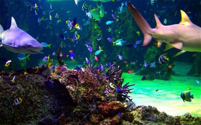 Aquarium Live HD+ Screensaver Screenshot 04 9wg6z1n