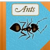 The Strange & Wonderful World of Ants