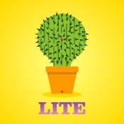 Lucky Cactus Mini