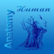 Human Anatomy 2017