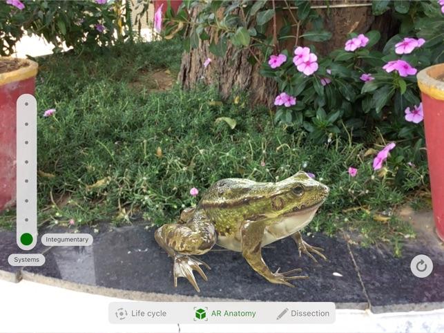Froggipedia Screenshot