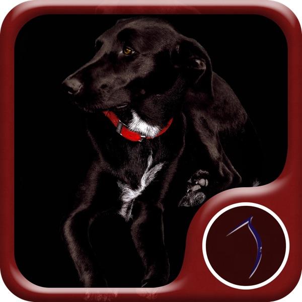 Dog Wallpaper: HD Wallpapers