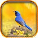 512x512bb - Carnaval de aplicaciones y juegos gratis para iPhone y iPad!