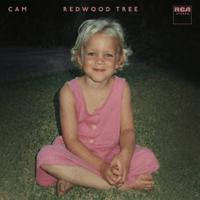 Cam - Redwood Tree