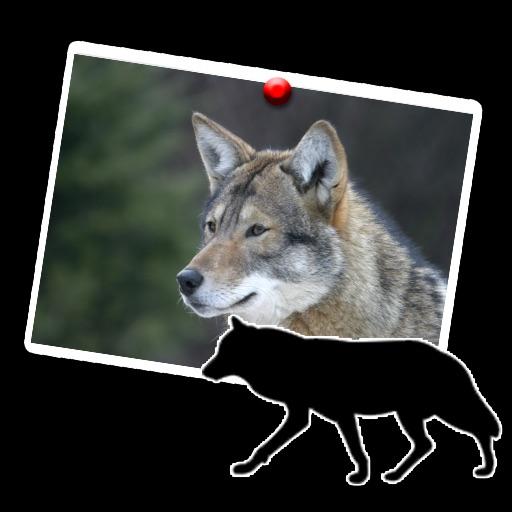 wolf wonderful