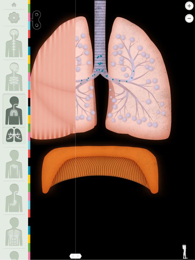 Der menschliche Körper Screenshot