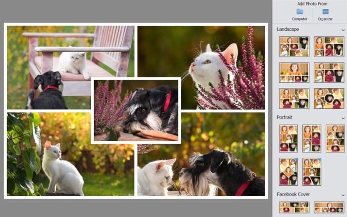 Adobe Photoshop Elements 2019 Screenshot 03 1ixondsn