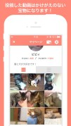 犬や猫の動画がいっぱい!動画編集も簡単!〜PiVid〜スクリーンショット4