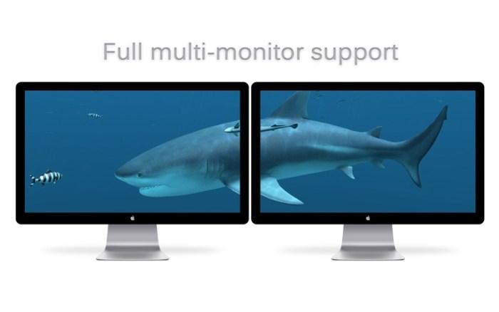 5_Sharks_3D.jpg