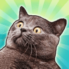 INGAME OOO - Mad Cats - catty sticker pack for iMessage  artwork