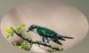 Andreea Jones - Cuckoos Database Grafik