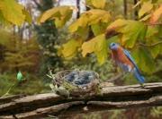 Bluebird - Milkshake
