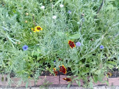 My Wildflower Garden – Metuchen, New Jersey