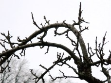 Branches at Quarr Abbey