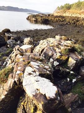 Ochrolechia tartarea, or the cudbear lichen, on the banks of Loch Ewe
