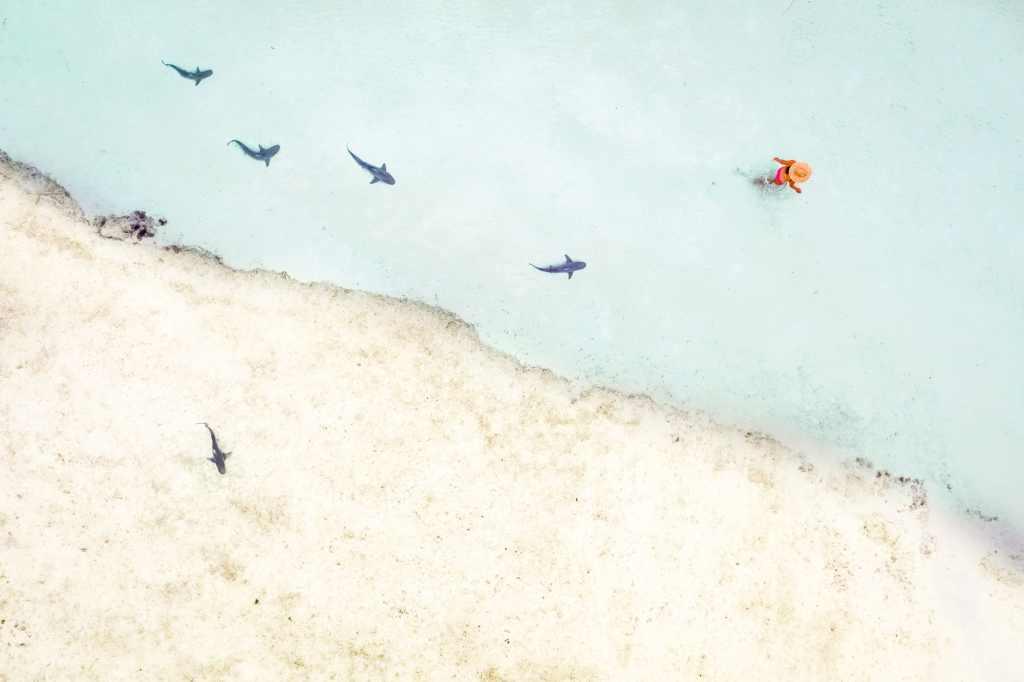 Coral Bay Shark Nursery Western Australia