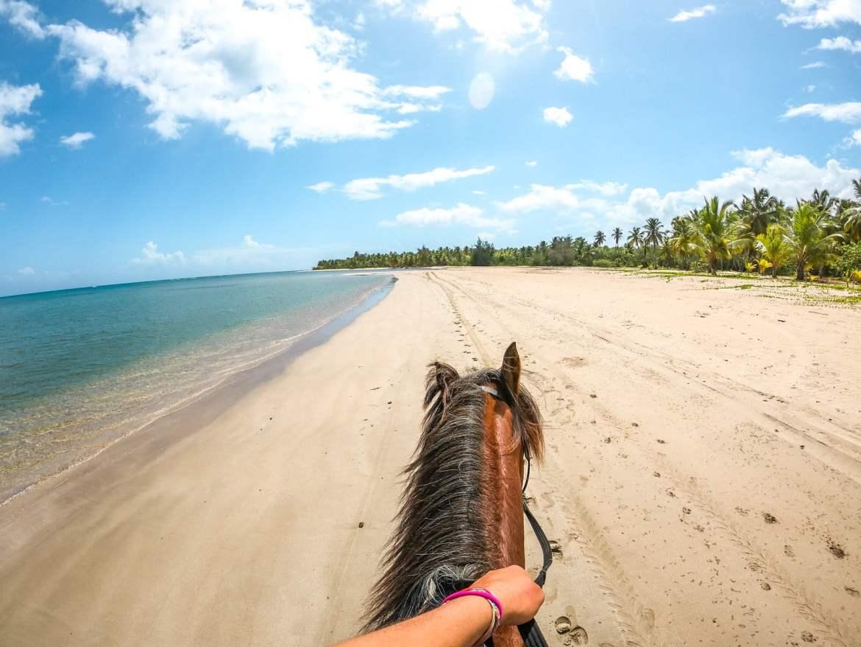 equitation las terrenas cheval