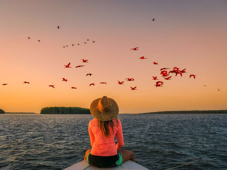 ibis delta parnaiba bresil kitesurf