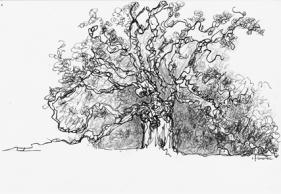 La tête dans les arbres