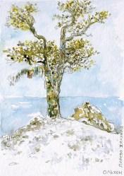 L'arbre à voeux 70 €