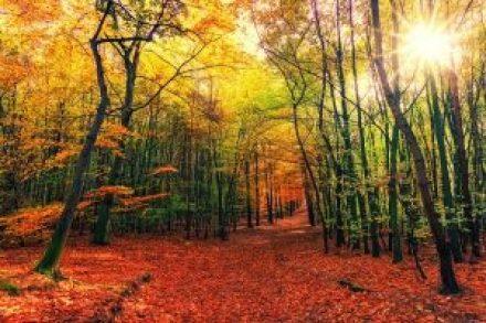 Un sentier forestier, au coeur de l'automne, nous dévoile des arbres qui ont plus ou moins perdu de feuilles