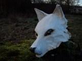 tête de spitz, chien blanc
