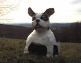 boule ... dog