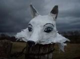 petit loup blanc aux yeux bleus