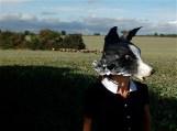 tête de chien berger, border collie