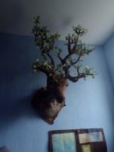 grand cerf en trophée aux feuilles de chêne