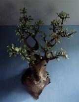 grand cerf aux feuilles de chêne