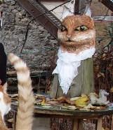 chat tigré et poitrine blanche