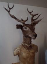 buste cerf , ( présenté sur mannequin sans tête )