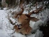 tête de cerf dans la neige