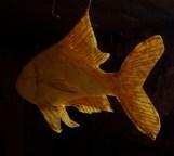 nageoires translucides, papier de soie