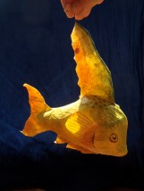 "poisson -citron ""papier maché"""