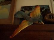 oiseau arc en ciel