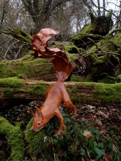 écureuil constatant la douceur de ce mois de janvier en Bourgogne