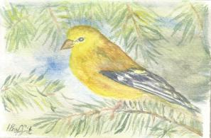 Goldfinch - Watercolour
