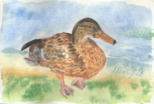 duck chesham