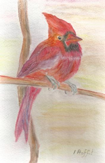 On the branch - Watercolour pencils