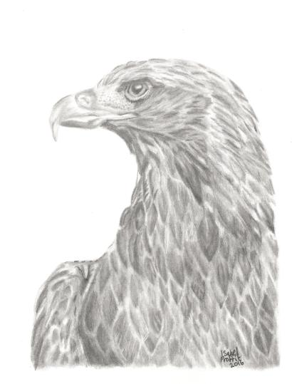 eagle-in-pencil
