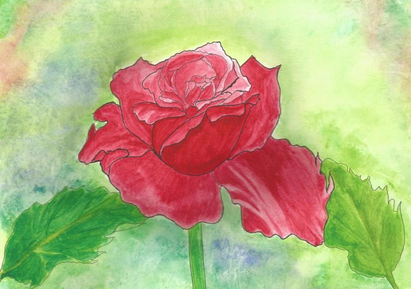 rose  abstract.jpg