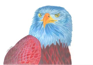 Coloured pencil picture