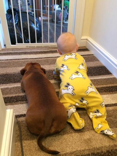 Our dachshund Ralph, with our baby Isabelle - he does occasionally lick her
