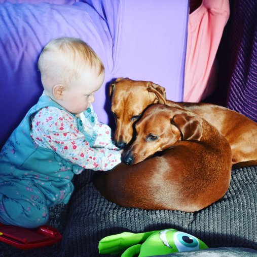 Our baby and our dachshunds