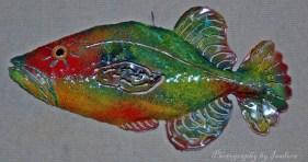 Queen-Trigger-Fish---web-si