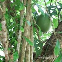 Dense Costa Rican Rainforest
